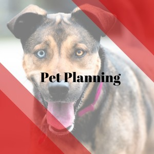 Pet Planning Attorneys in Port St. Lucie and Vero Beach